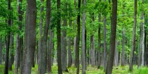 Erster Gen-Erhaltungswald Brandenburgs