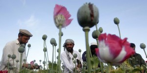 File photo of Afghan farmers working at a poppy field in Jalalabad province